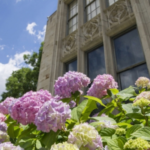 Cathedral of Learning and hydrangeas