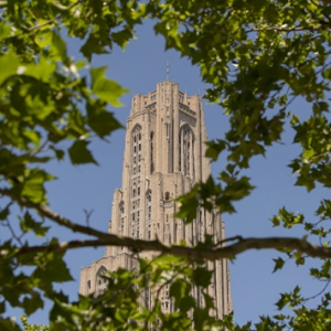 The Cathedral of Learning through branches